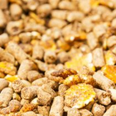 Cassia Gum in Feed Industry