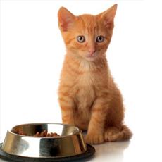 Tamarind Powder in Pet Food
