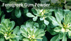 Fenugreek Gum Powder