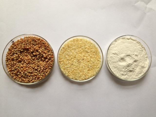 Guar Seed - Guar Gum Splits - Guar Gum Powder