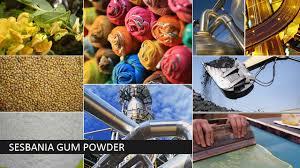 Sesbania Gum Powder