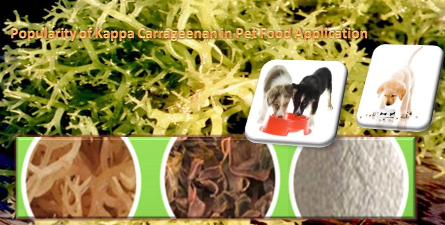 Popularity of Kappa Carrageenan in Pet Food Application