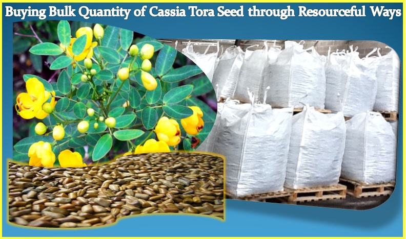 Buying Bulk Quantity of Cassia Tora Seed through Resourceful Ways