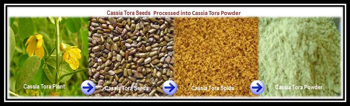 Cassia Tora Seeds  Processed into Cassia Tora Powder