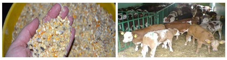 Cattle Feed Preparation-Ingredients Used