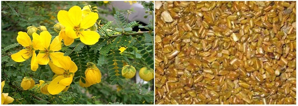 Basic Biological Nature and Impact on Industrial Usage of Cassia Tora Gum Powder