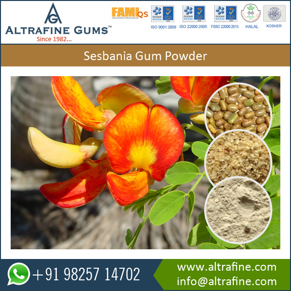 Sesbania Gum Powder