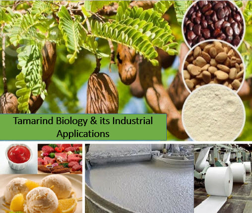 Industrial Application of Tamarind
