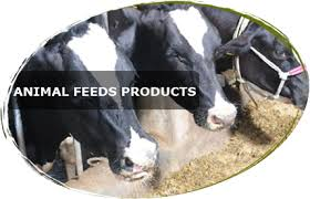 guar meal for animals and cattle feed