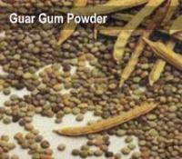Guar Gum Powder.JPG